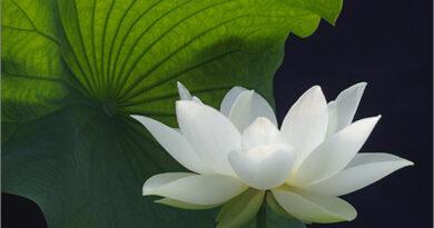 FAQ: HỎI ĐÁP VỚI THIỀN SƯ S.N. GOENKA VỀ KINH NGHIỆM THIỀN VIPASSANA (TỔNG HỢP 2)