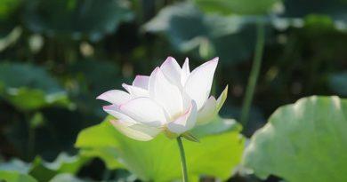 CHƯƠNG III - ÂN-ĐỨC PHÁP-BẢO (Dhammaguṇa)
