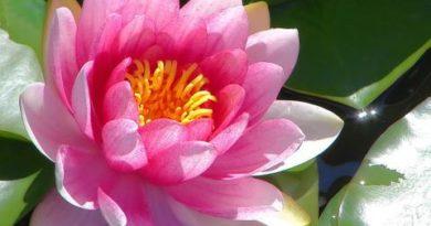 Abhidhammapitake Dhammasangani-mulatika