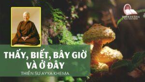 Audios Cuốn Thấy Biết, Bây Giờ Và Ở Đây - Ni Sư Ayya Khema